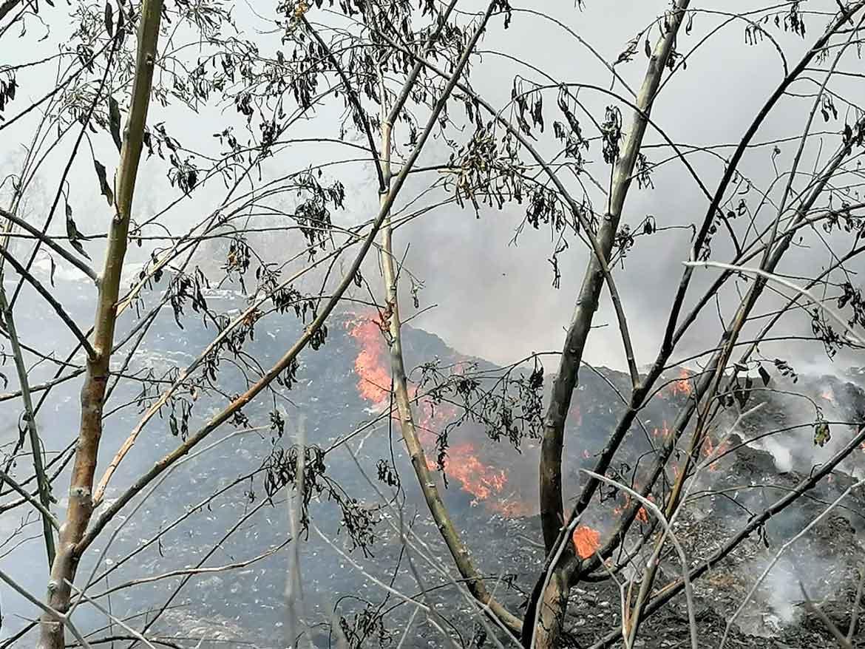 Photo of Piden a ciudadanos denunciar tala de árboles y quemas